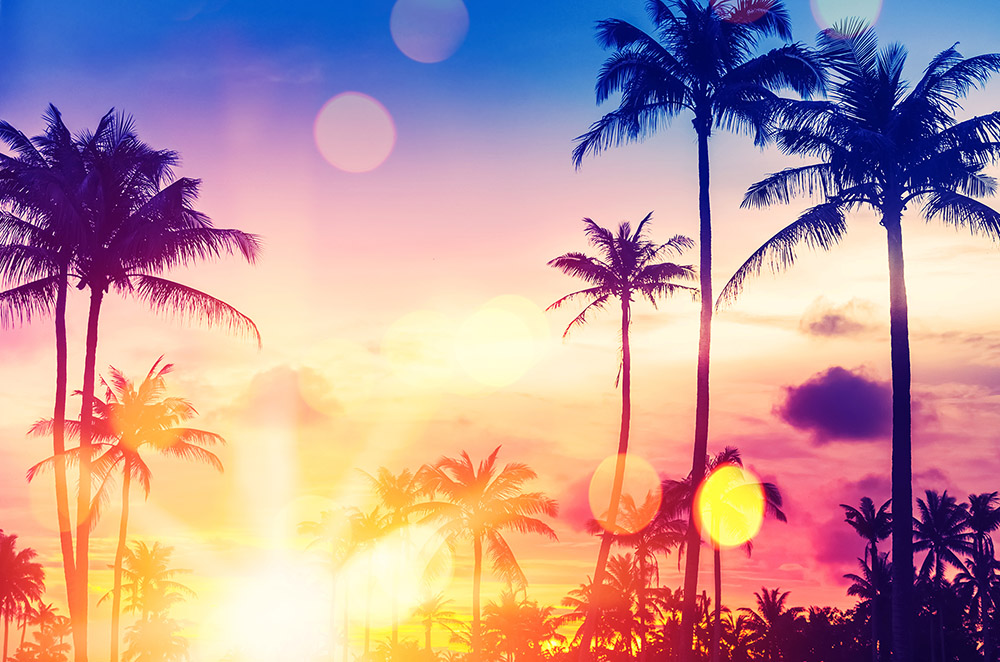 Image of Palm Trees in the Sunset